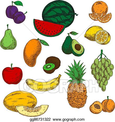 Vector art assortment of. Peaches clipart ripe fruit