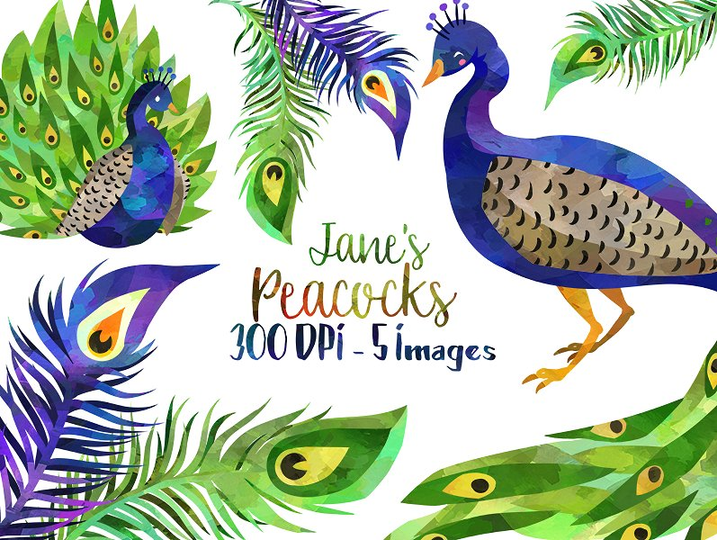 Peacock clipart. Watercolor illustrations creative market