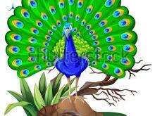 Images cartoon clip art. Peacock clipart