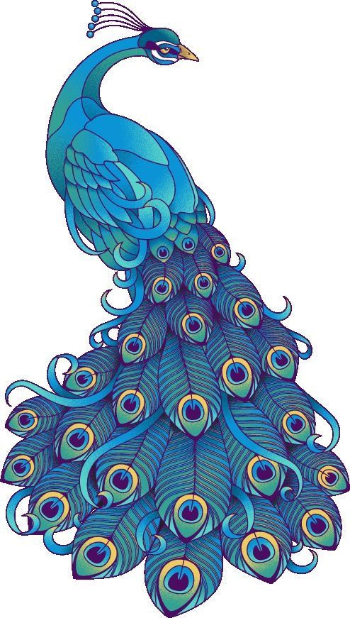 Peacock clipart. Art nouveau best tavusku