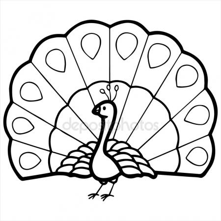 Peacock clipart. Drawing black and white