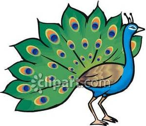 Peacock clipart. Panda free images peacockclipart