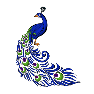 Peacock clipart. Images png format clip