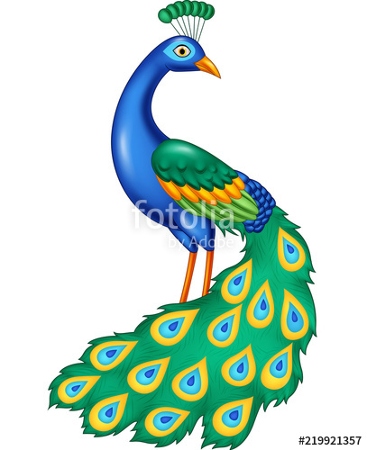 Beautiful peacock with the beautiful colorful feathers clipart free image