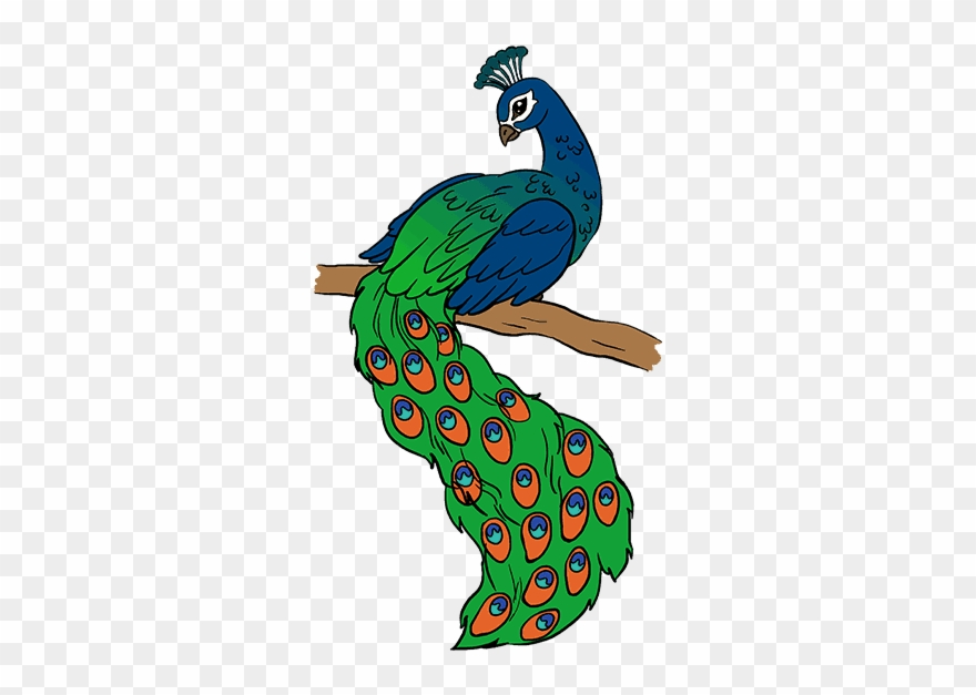 Drawing picture of . Peacock clipart draw