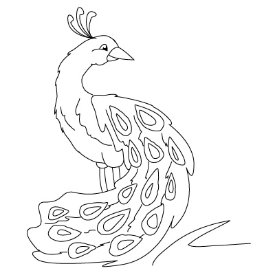 Free drawing download clip. Peacock clipart draw