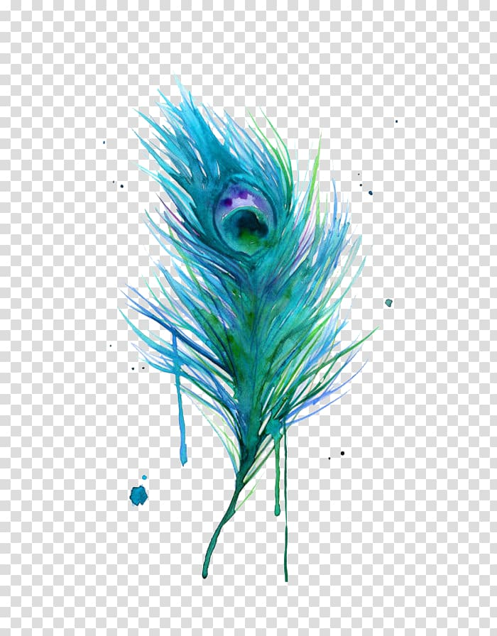Peacock clipart fether. Asiatic peafowl feather bird