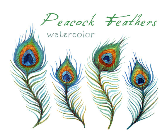 Free download clip art. Peacock clipart fether