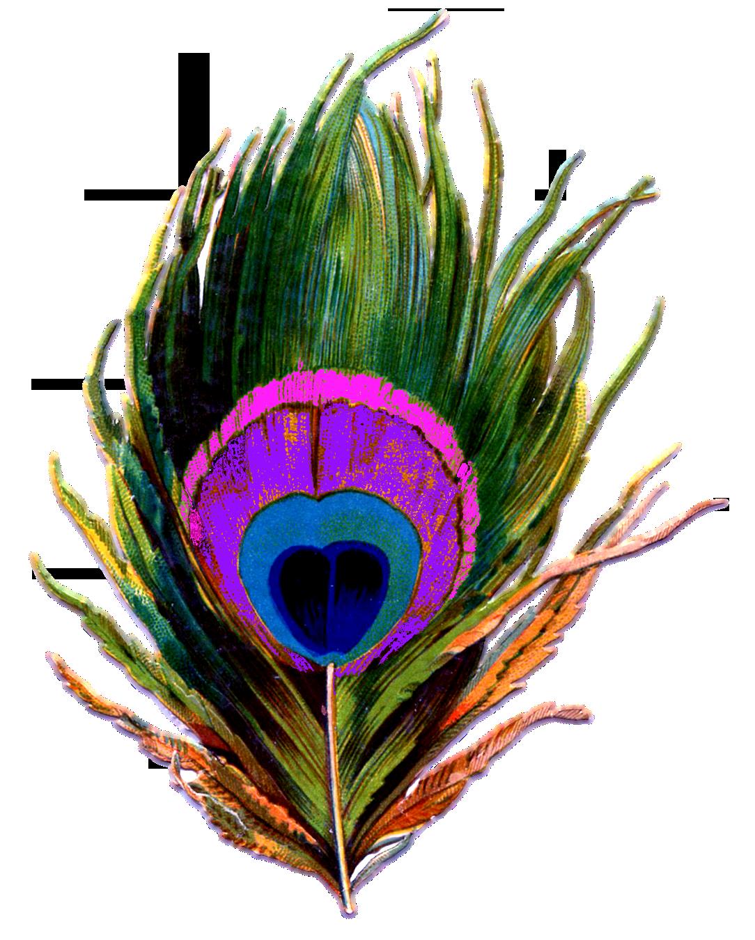 peacock clipart green peacock