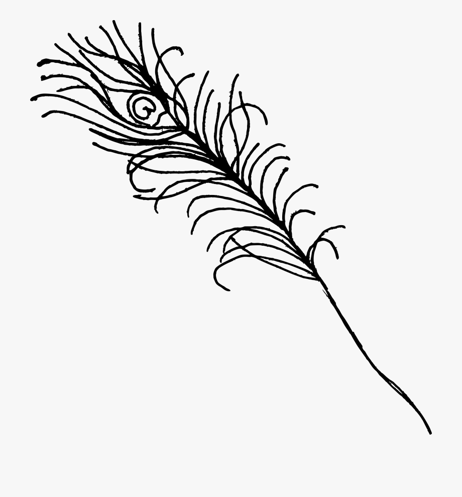 Peacock clipart line art. Png transparent free cliparts
