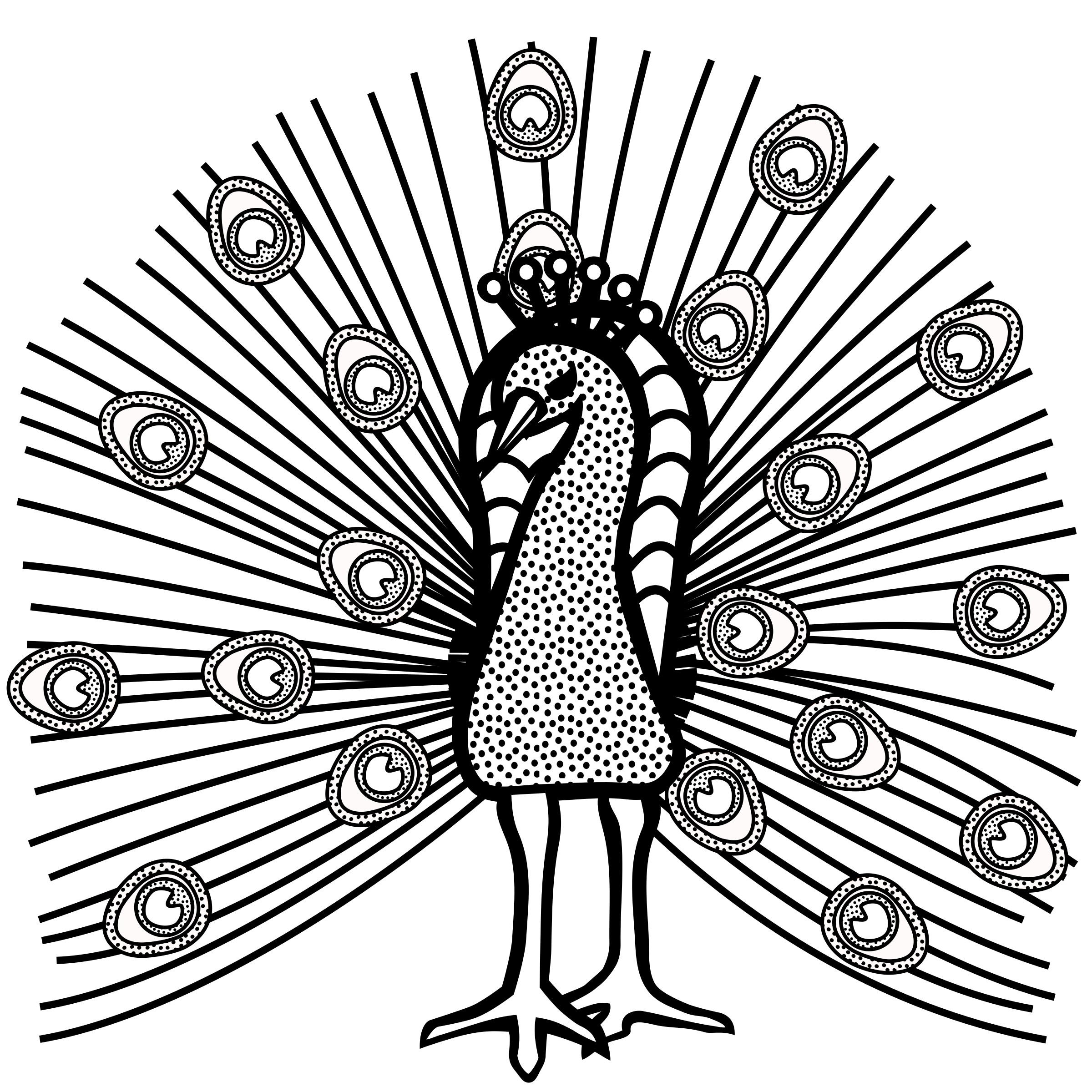 Wing clipart peacock. Lineart big image png