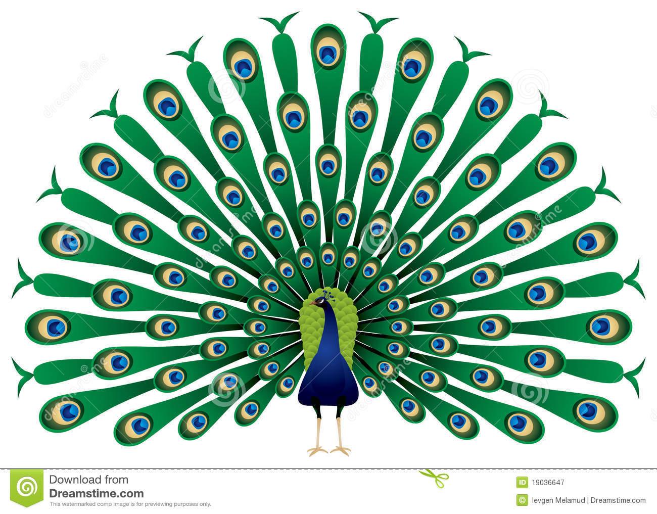 clip art clipartlook. Peacock clipart peacock bird