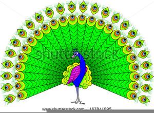 Dancing free images at. Peacock clipart peacock dance