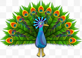 Images png free download. Peacock clipart peacock dance