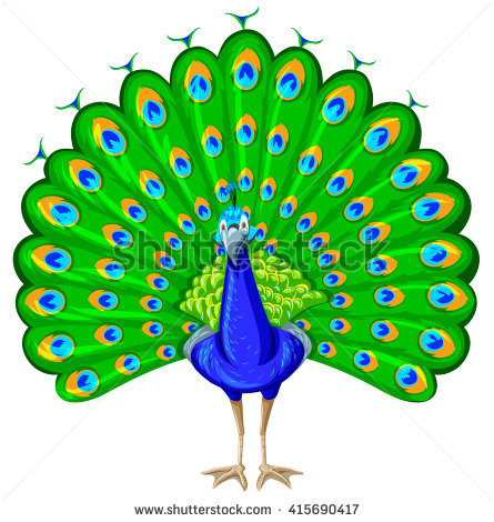 Peacock clipart peacock dance. Dancing station