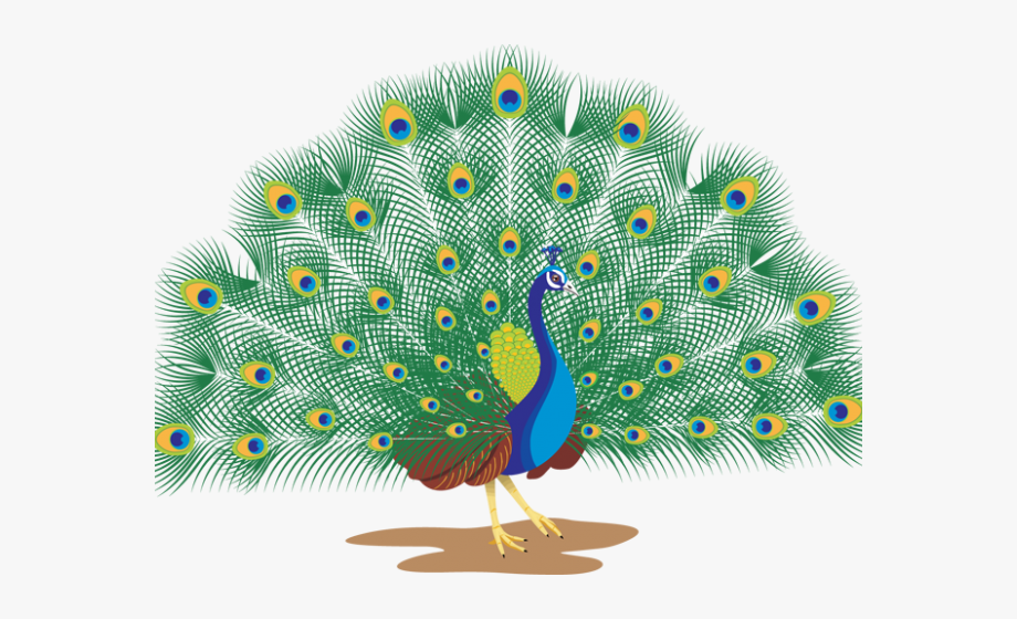 Peacock clipart peacock dance. With white