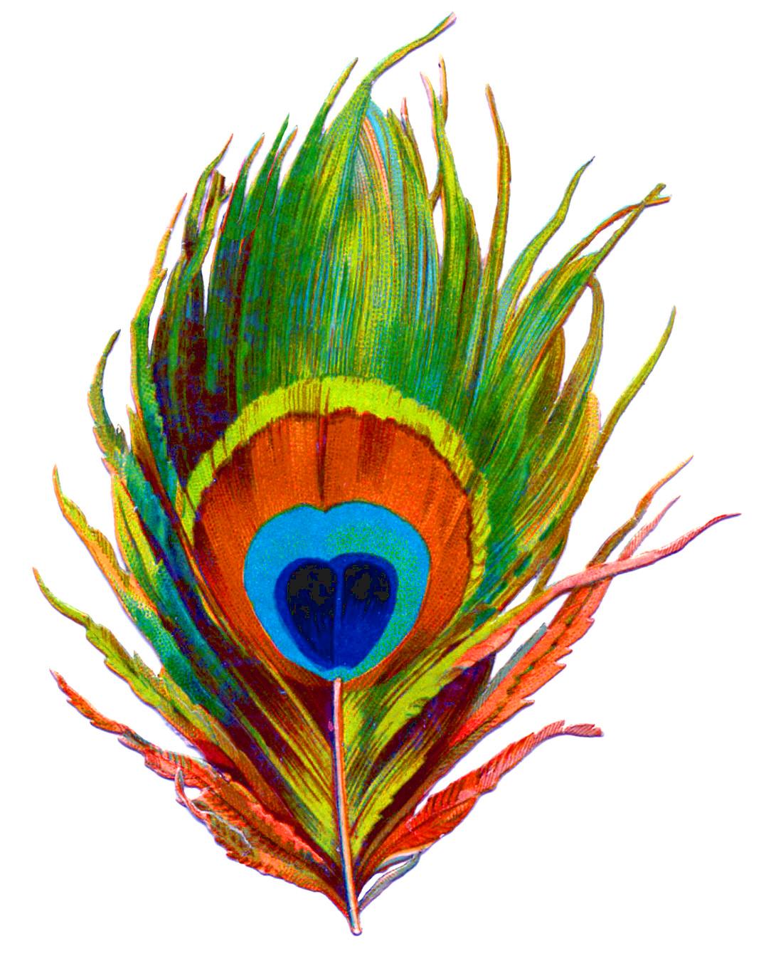 peacock clipart printable