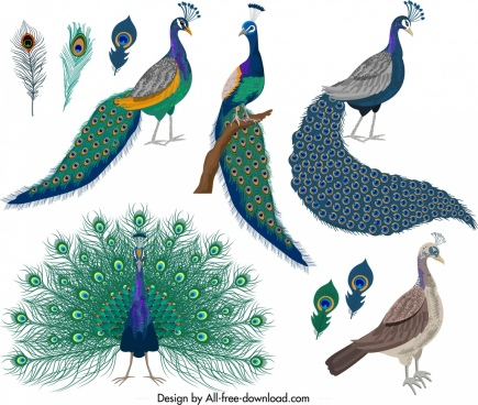 peacock clipart realistic cartoon peacock realistic cartoon transparent free for download on webstockreview 2020 peacock clipart realistic cartoon