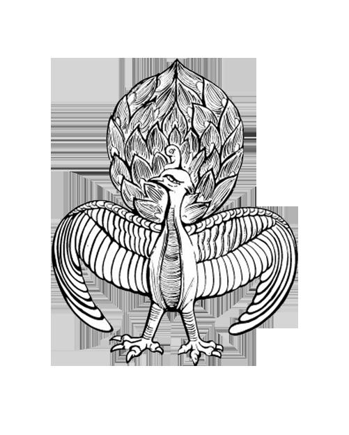 Peacock clipart sketch. Peafowl drawing at getdrawings