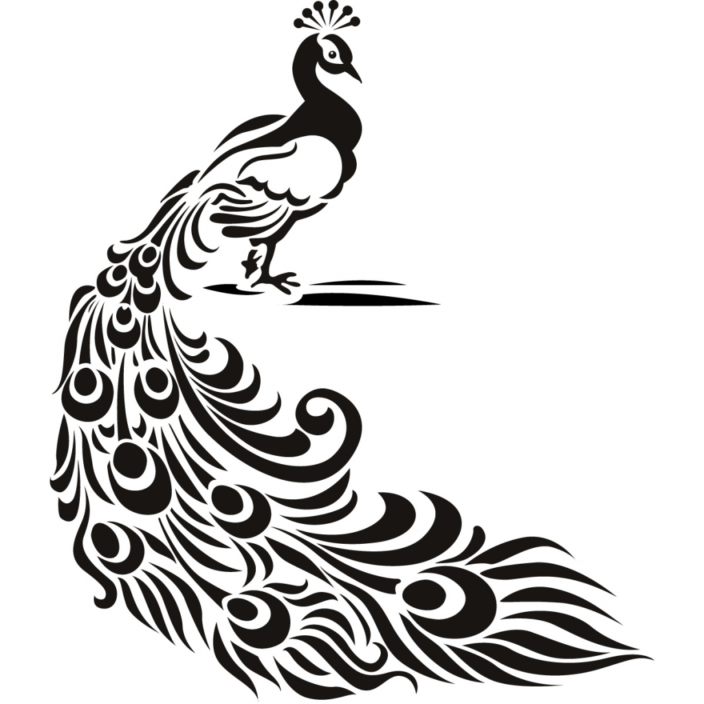 Drawing free download best. Peacock clipart sketch