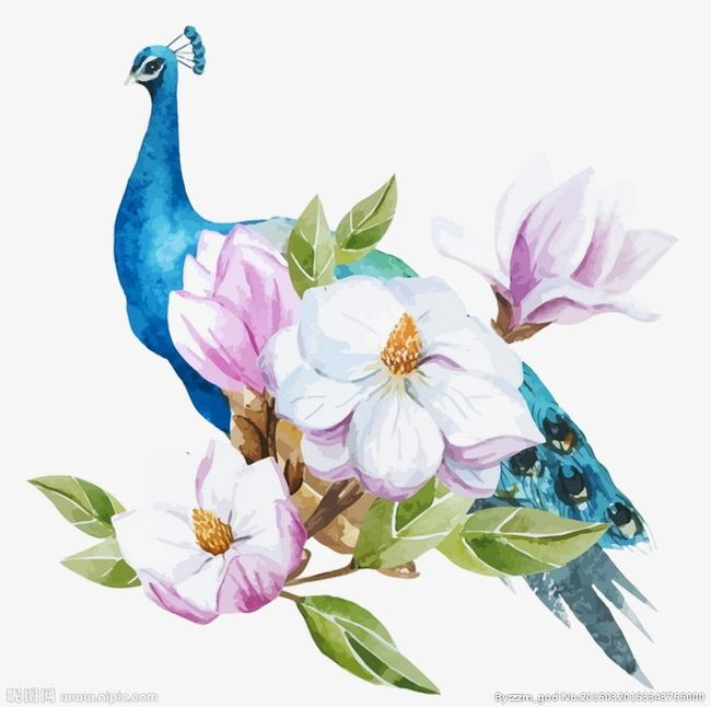 Blue png animals branch. Peacock clipart summer flower