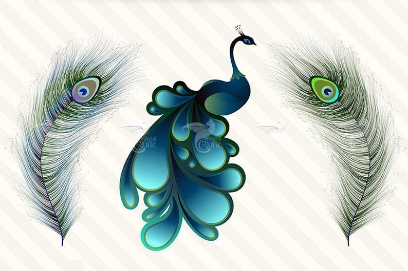 Peacock clipart turquoise. Elegant png and vector