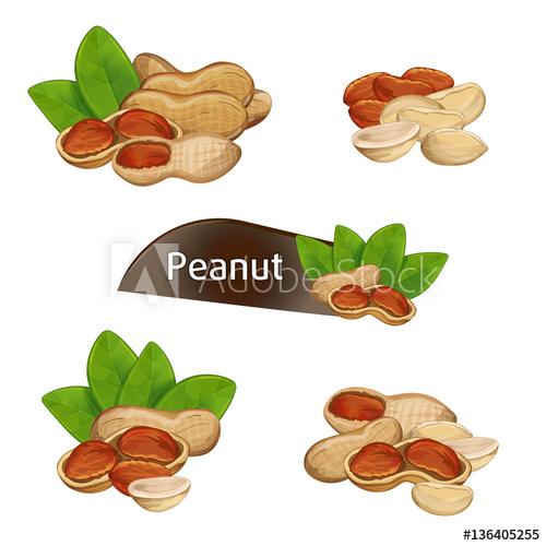 X free clip art. Peanut clipart ground nut
