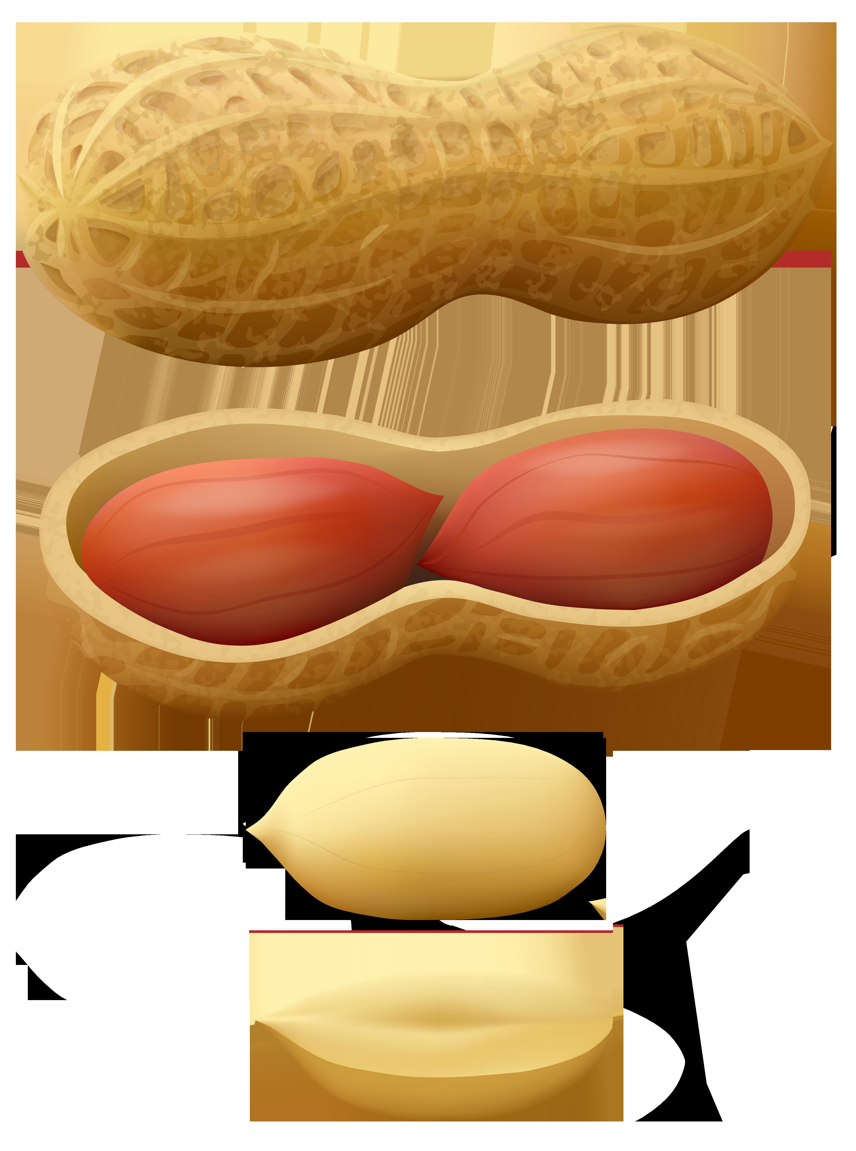 Clipart food nuts. Peanuts png clip art