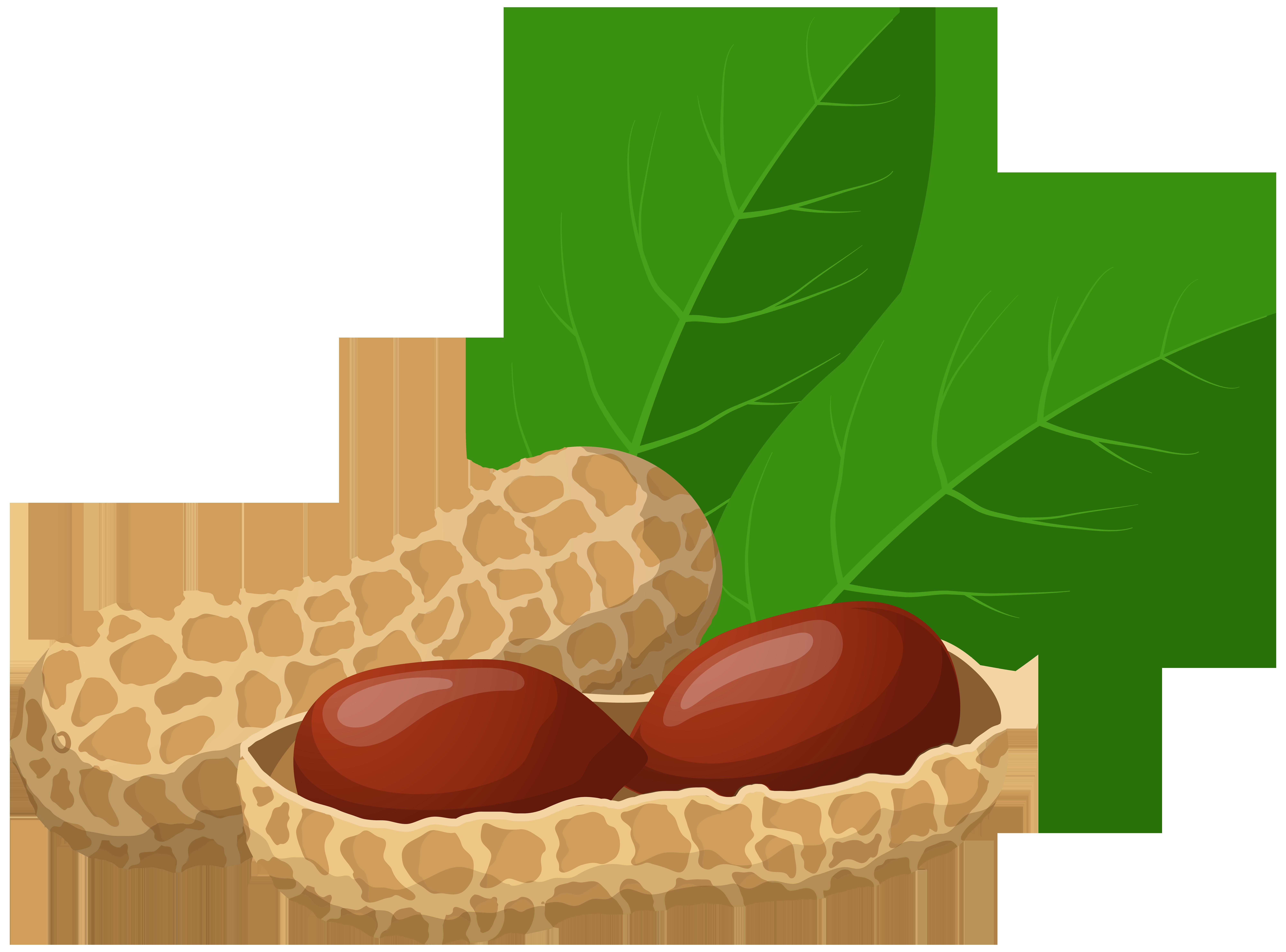 Peanuts png clip art. Clipart food nuts