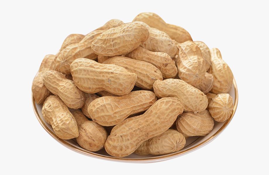 Peanuts clipart groundnut. Transparent peanut cliparts cartoons