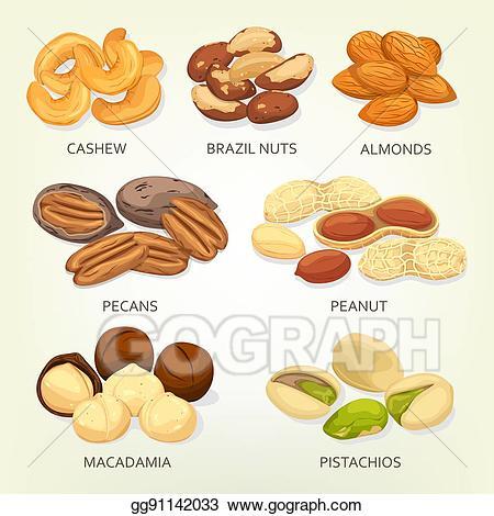 Vector illustration brazil nuts. Peanuts clipart nut seed