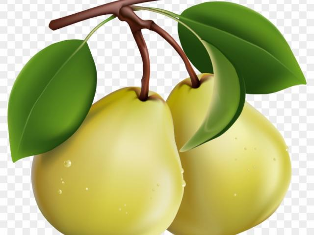 Pear clipart 3 fruit. Free download clip art