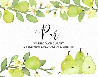 Pear clipart artistic. Clip art watercolor etsy