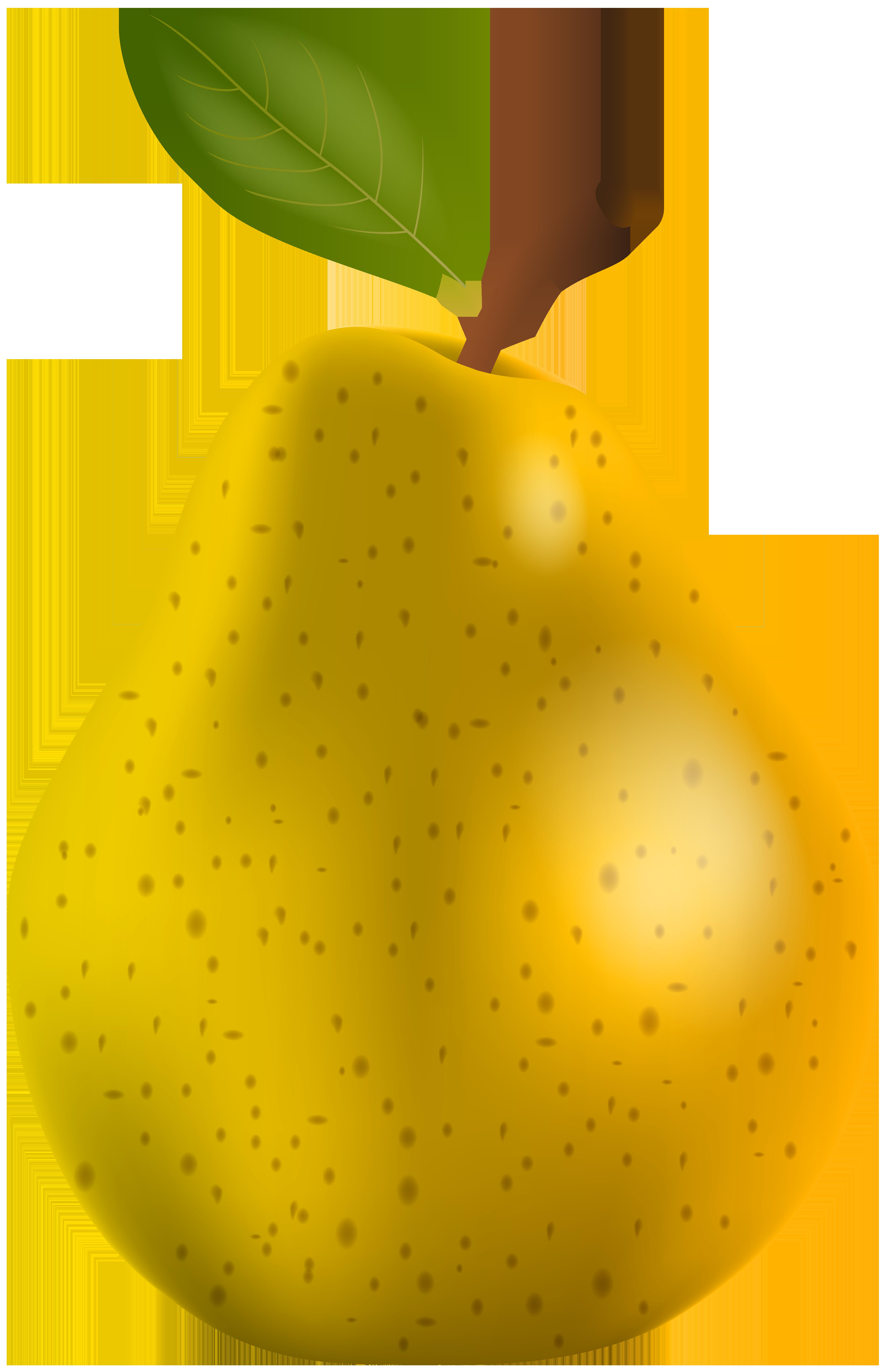 Pear clipart different kind fruit. Transparent png clip art