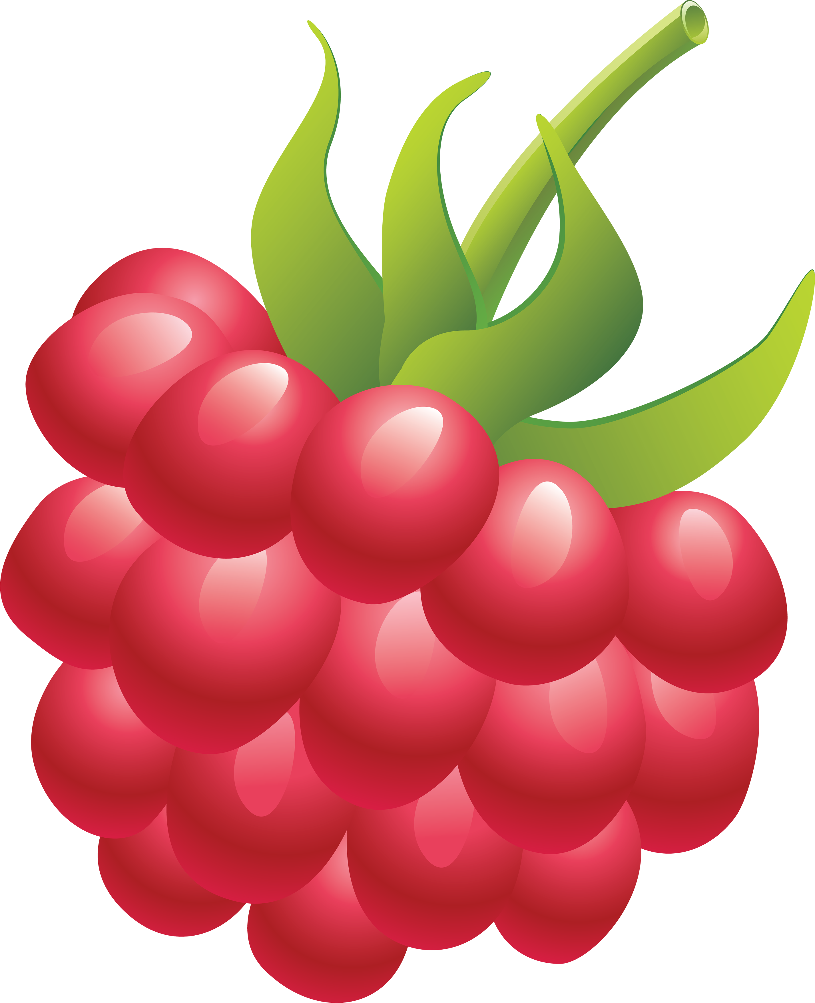 Pear clipart five. Raspberry isolated stock photo