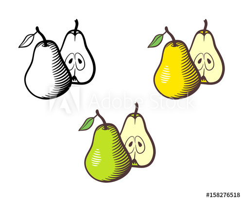 Vector hand drawn illustration. Pear clipart fruit seed