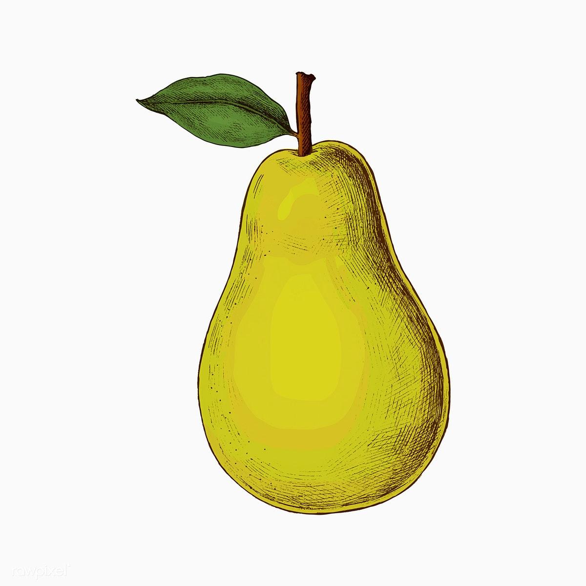 Download premium illustration of. Pear clipart illustrated