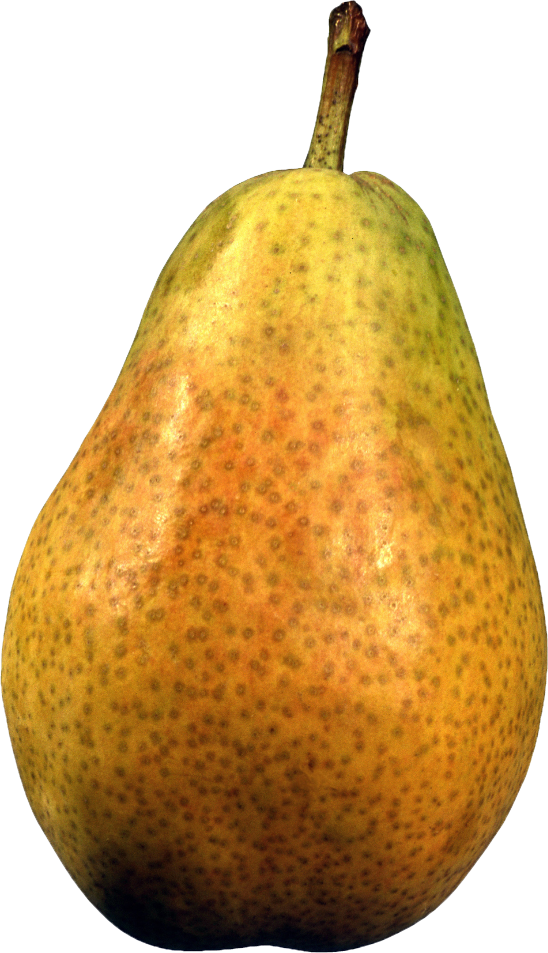 Pear clipart jambu. Index of image obst