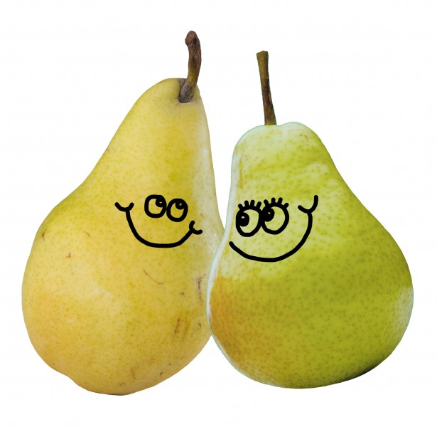 A of pears free. Pear clipart pair pear