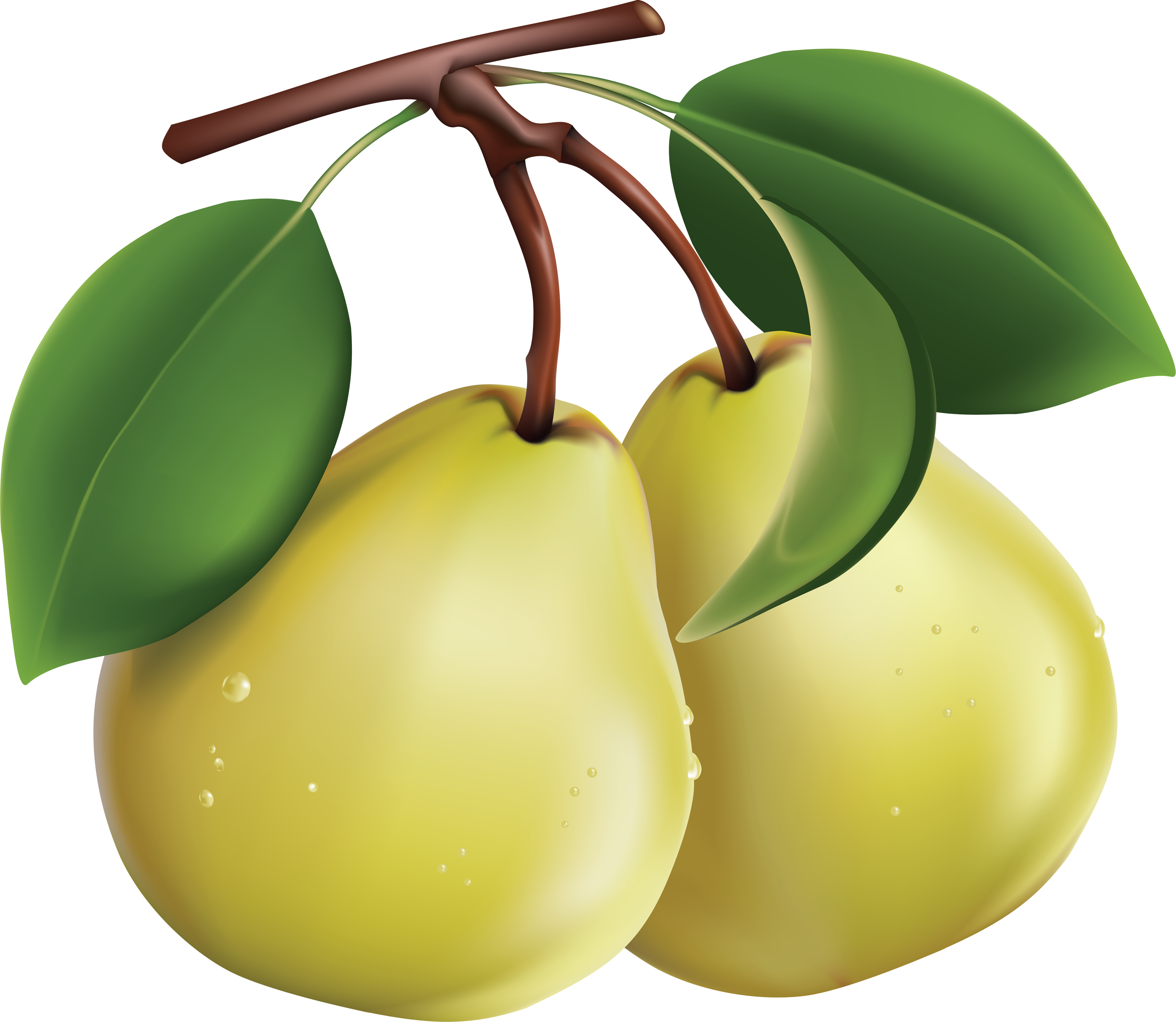 Pear clipart silhouette. Thirty one isolated stock