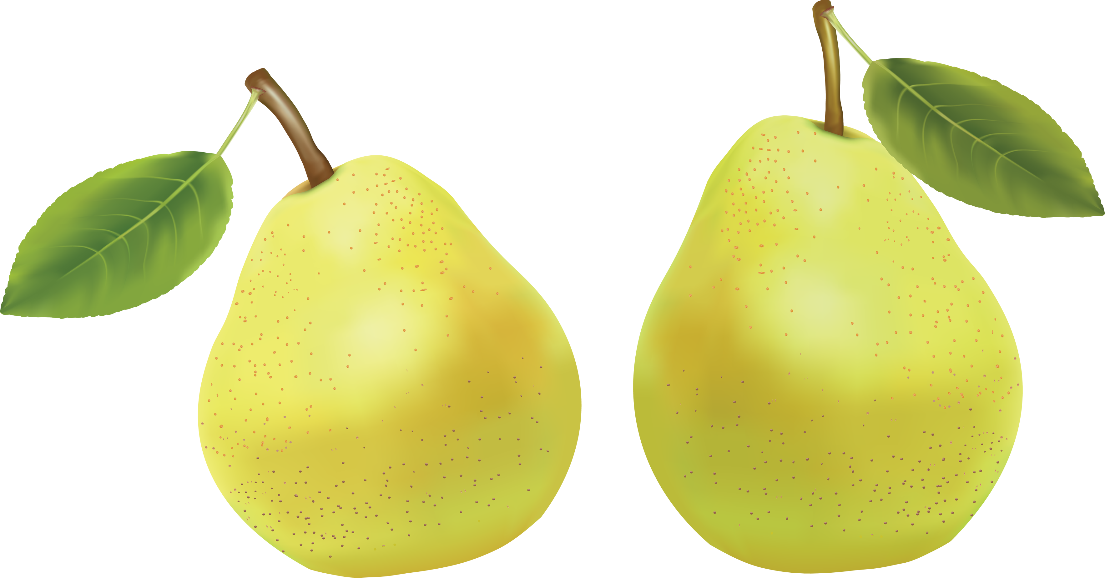 Pear clipart two. Png images free download