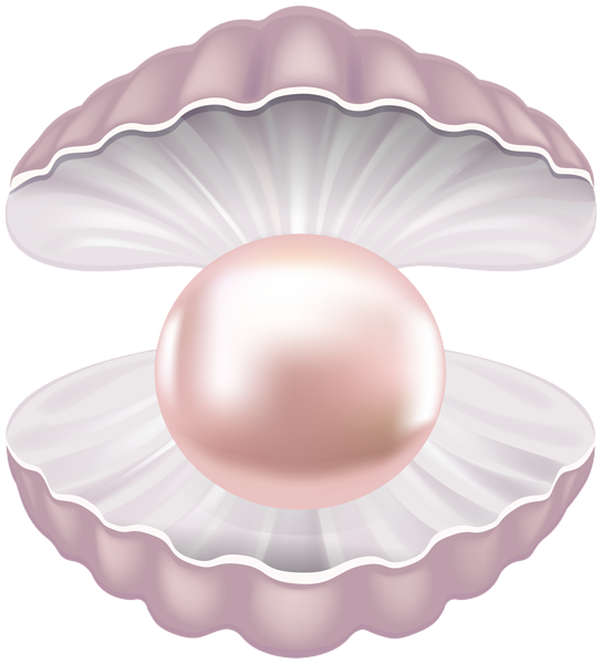 Pearl transparent png clip. Shell clipart colorful