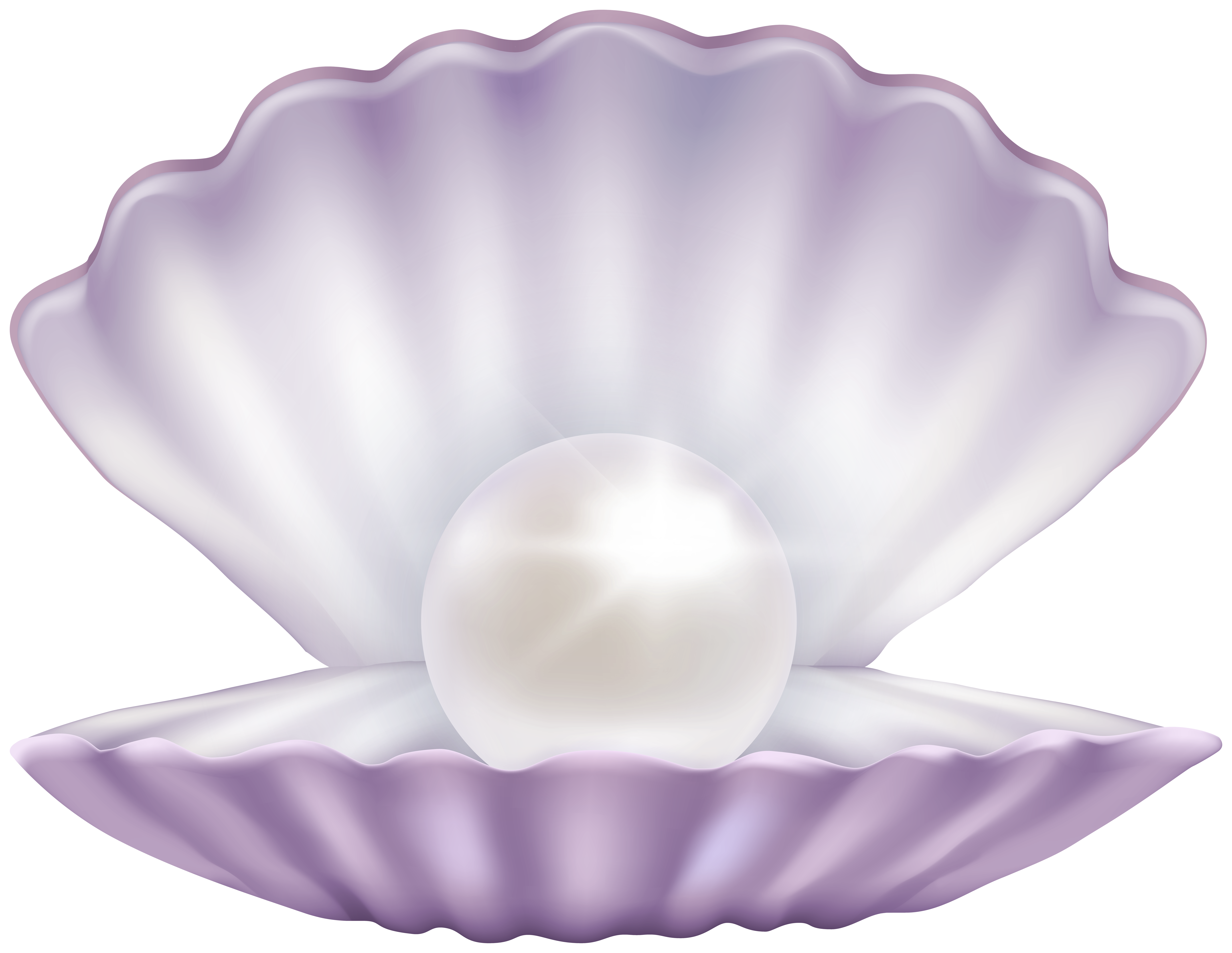 Shell clipart pearl clipart. Clam with png gallery