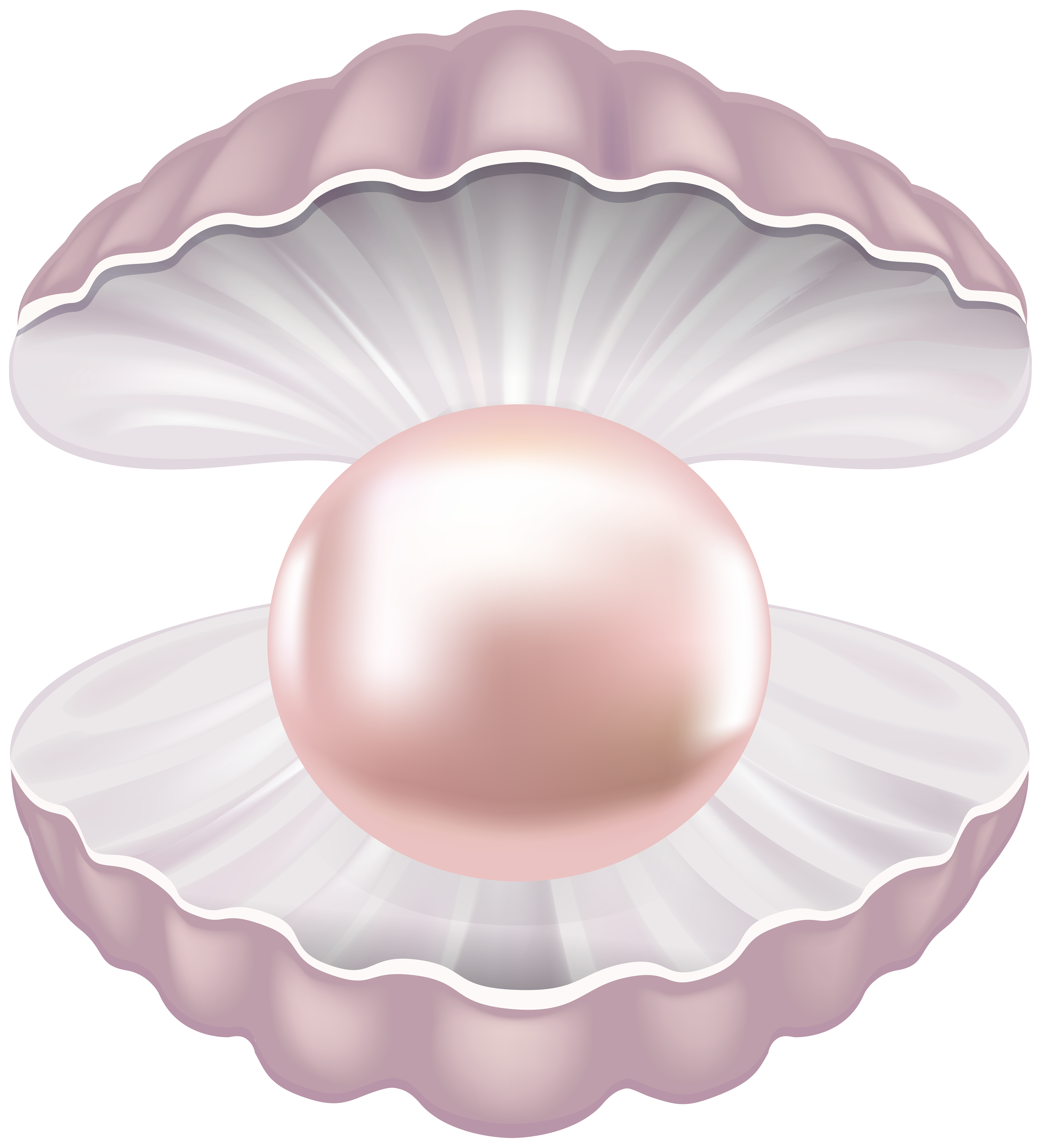 Shell clipart colorful. Pearl transparent png clip