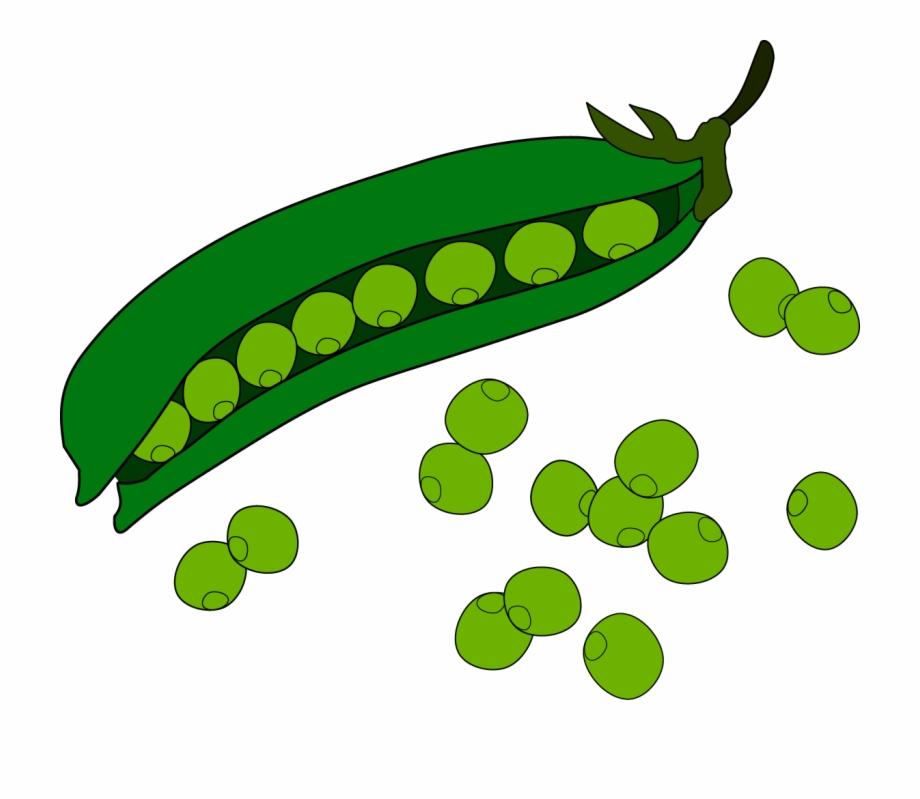 Pea fruit clip art. Beans clipart runner bean