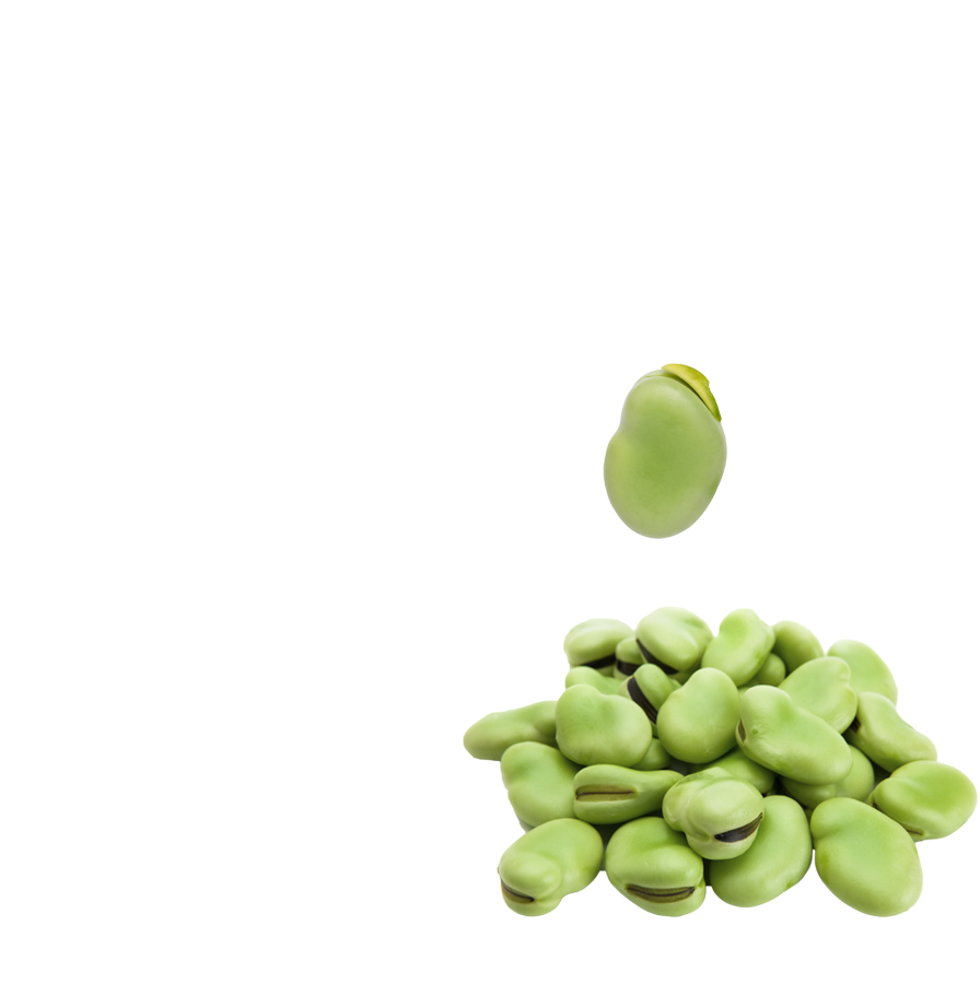 Bean clipart fava bean. Broad beans