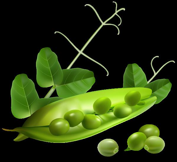 peas clipart winter