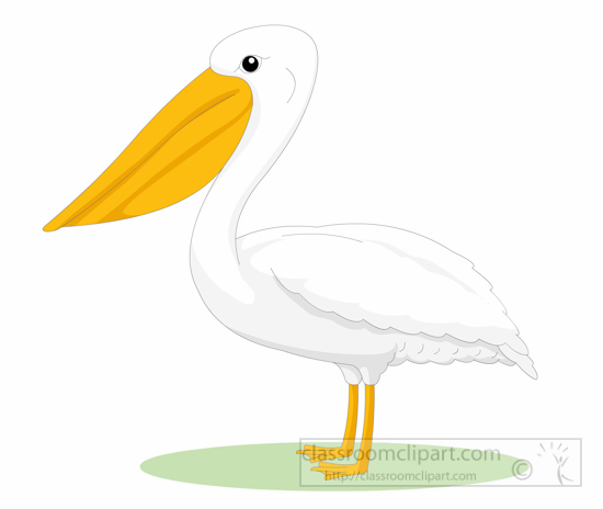 Pelican clipart. Animal bird side view