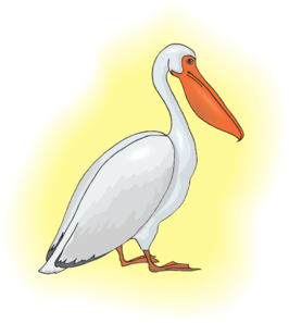 Pelican clipart. With yellow background clip