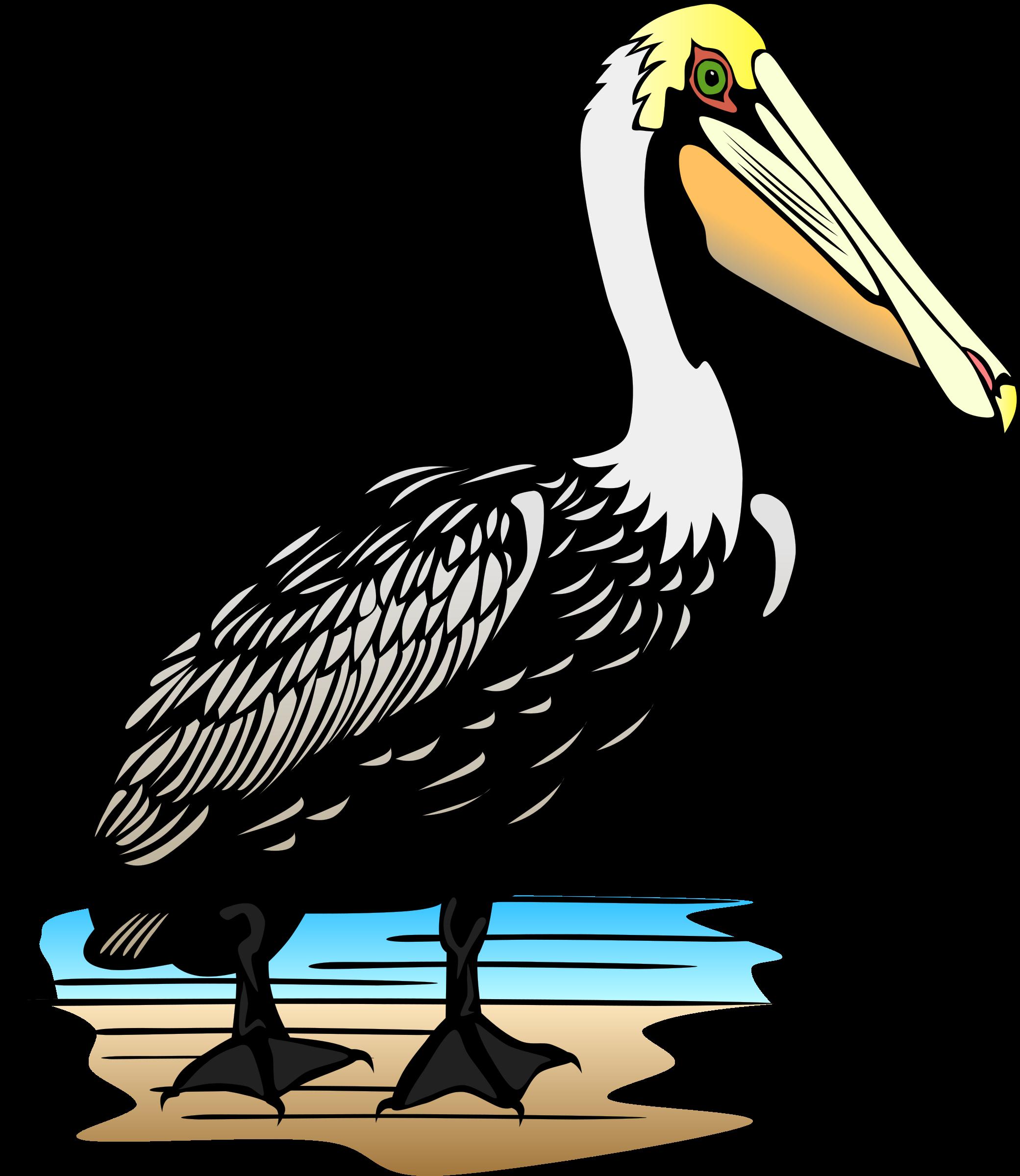 . Pelican clipart fish